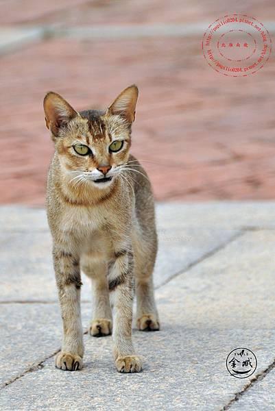 02歐厝隘門建築群組的貓咪