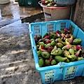 13東嶼坪地方特產的仙人掌果