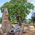 金門林務所雞蛋花百年古樹