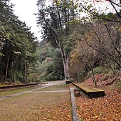 大雪山森林遊樂區雪山神木