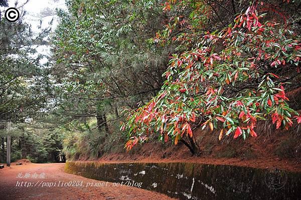 大雪山森林遊樂區往雪山神木林道