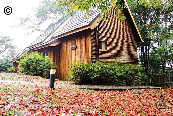 大雪山森林遊樂區小木屋區