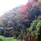 大雪山210林道