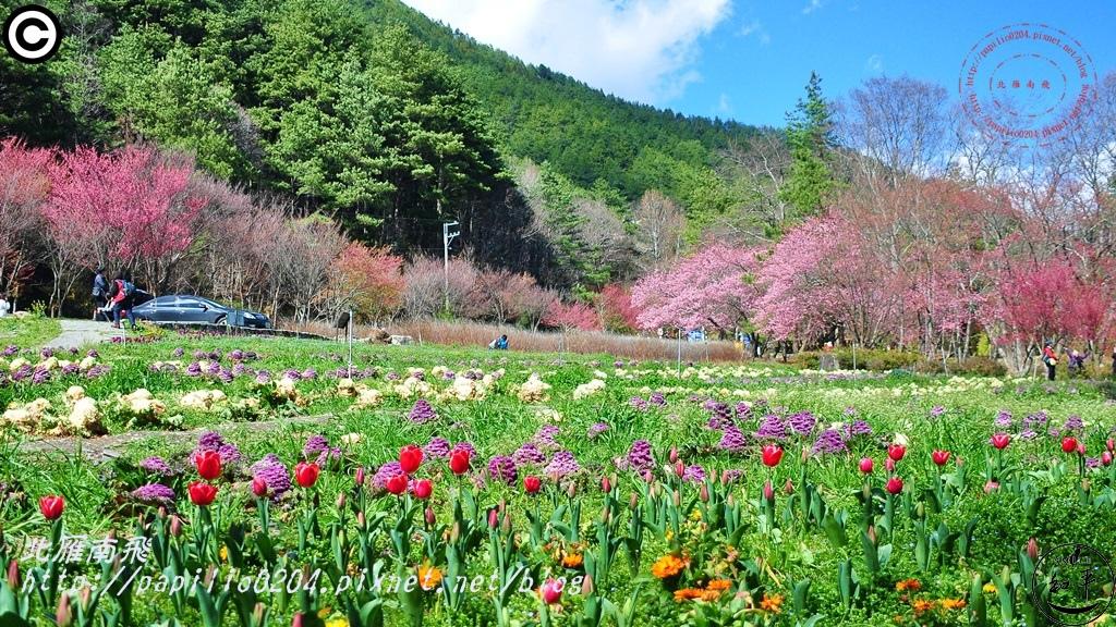 南谷櫻花台