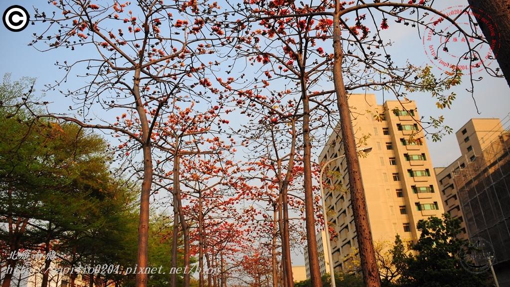 [台南‧北區] 東豐路木棉花道 2015/03/09