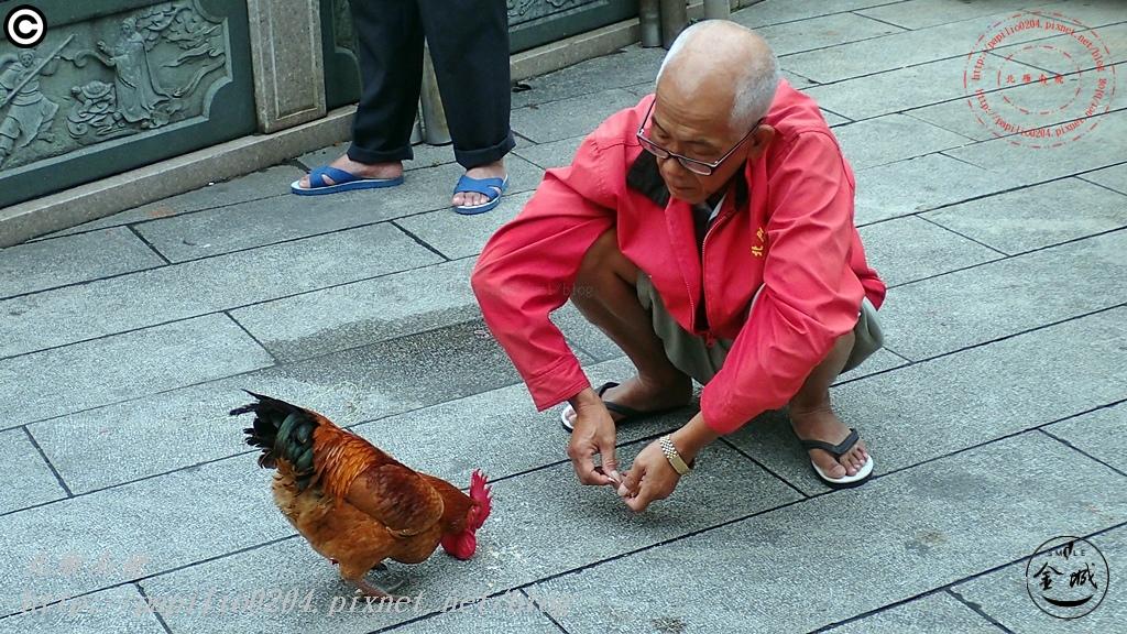 金門王爺雞