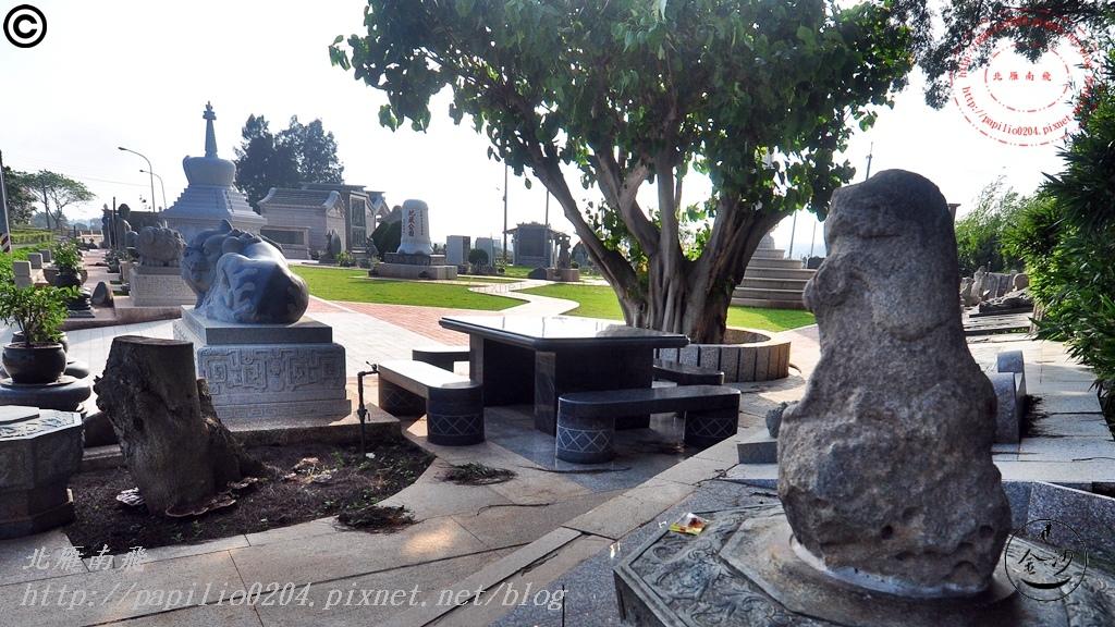 金門沙美大士宮地藏公園菩提樹神