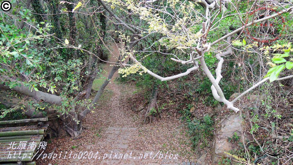 五虎山登山步道眺望台