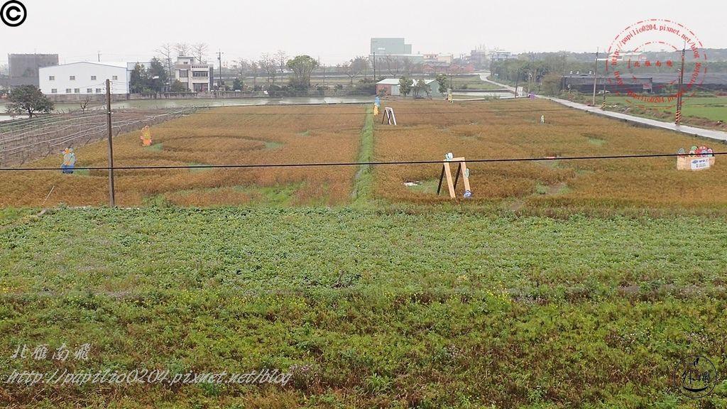 2016幽浮麥樂文化季外埔區三崁里小麥田-001.JPG