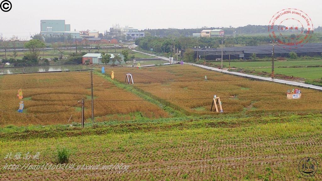 2016幽浮麥樂文化季外埔區三崁里小麥田-047.JPG