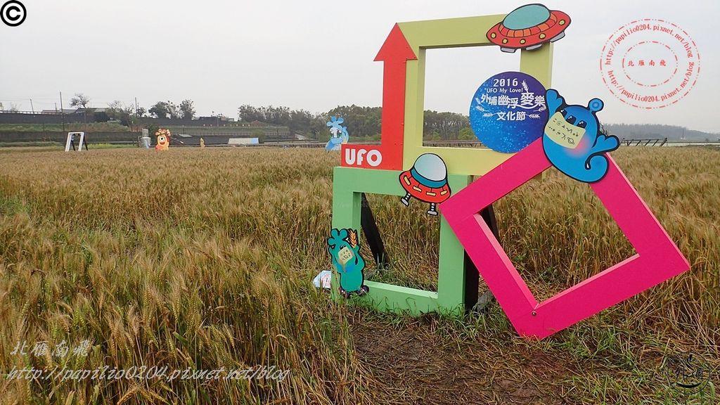 022016幽浮麥樂文化季外埔區三崁里小麥田.JPG