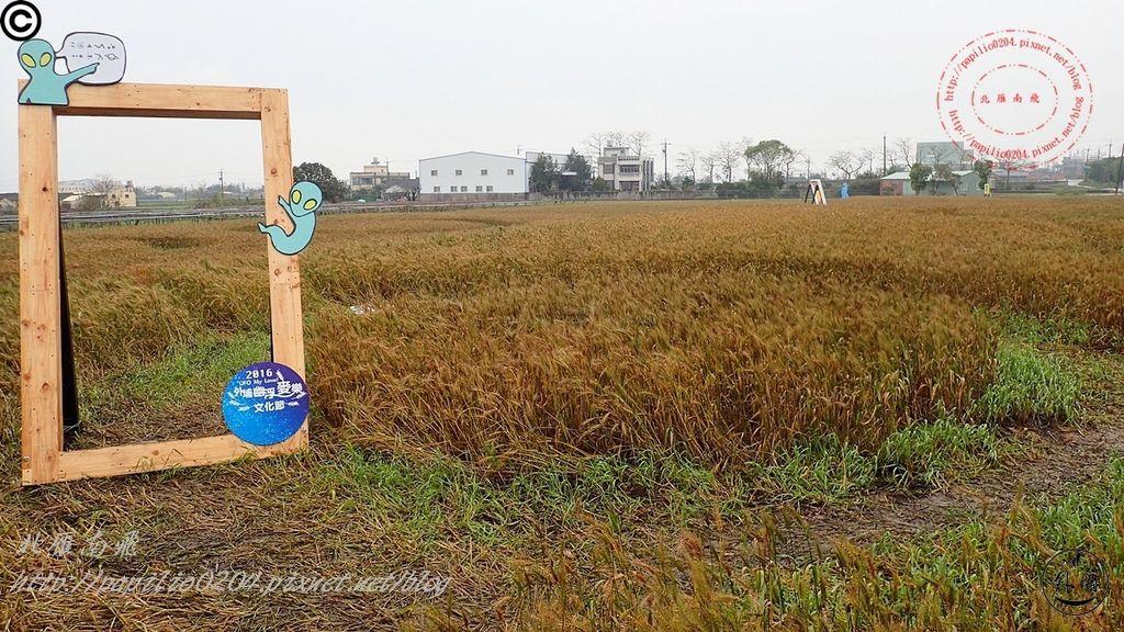 092016幽浮麥樂文化季外埔區三崁里小麥田.JPG