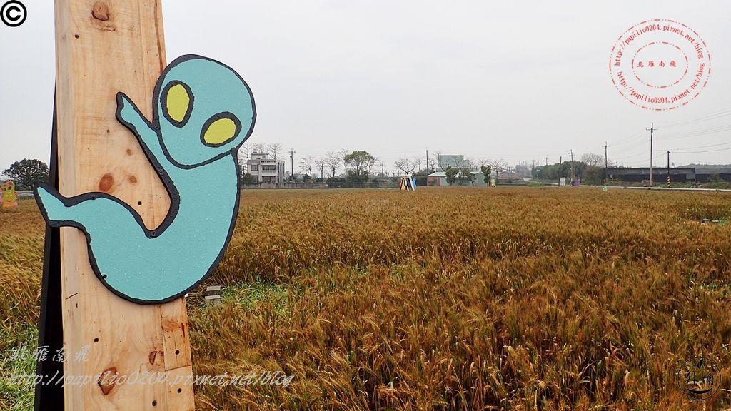 102016幽浮麥樂文化季外埔區三崁里小麥田.JPG