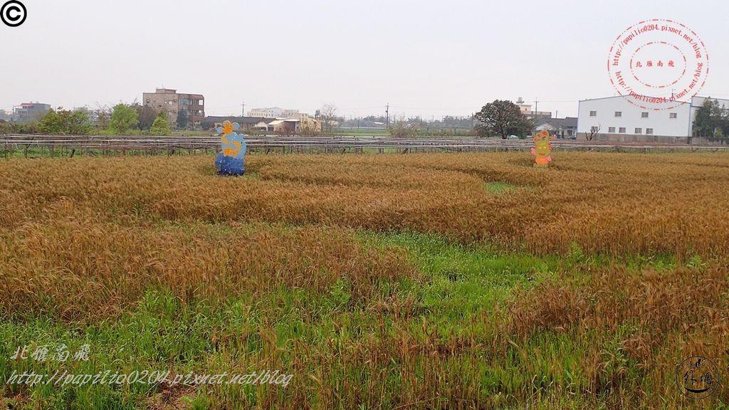 152016幽浮麥樂文化季外埔區三崁里小麥田.JPG