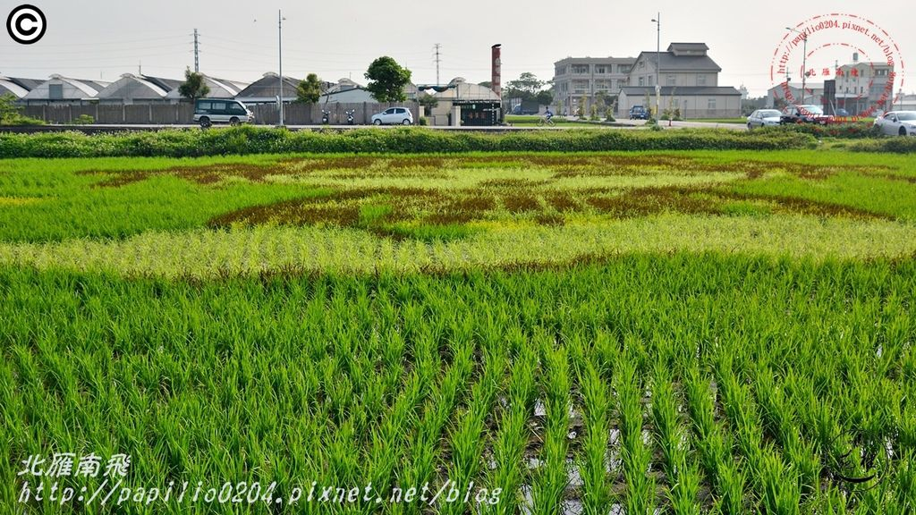 2016苑裡稻田彩繪Q版媽祖09.JPG