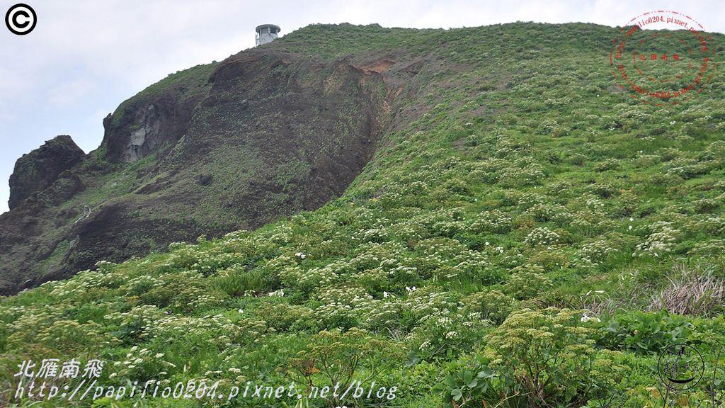 彭佳嶼島上的防葵花海(2015.05.03)06.JPG
