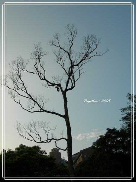 DSCN8188.jpg