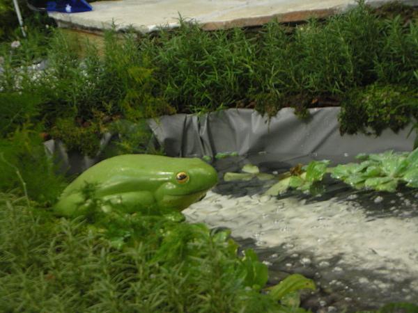 池邊的青蛙!