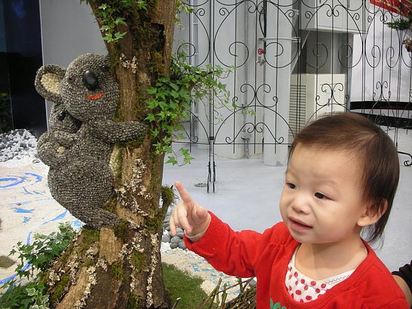 樹上有隻熊耶~