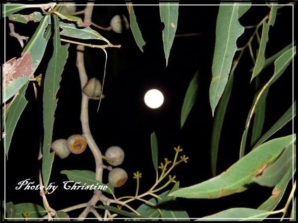 滿月的夜晚