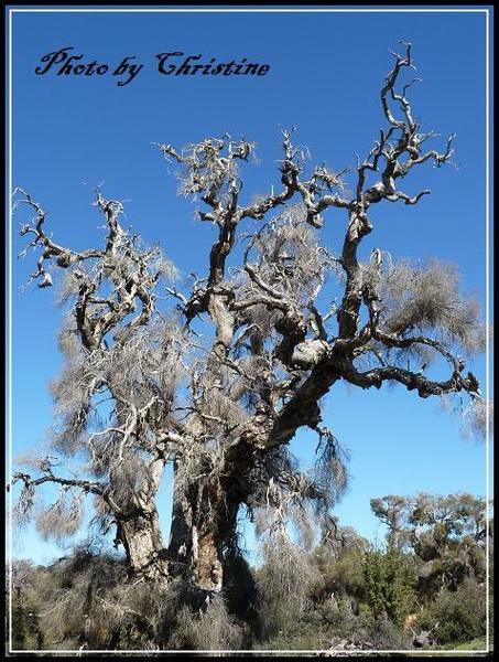 BUNKHOUSE身後的天然花園之枯樹~