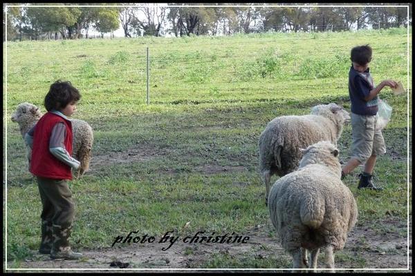 小孩看到羊時很愛餵他們,卻又害怕被羊追。