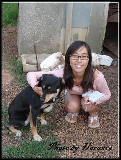 農場主人ㄉ牧羊犬 Jessie