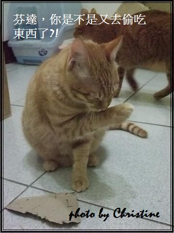 芬達(2010.10出生)3.JPG