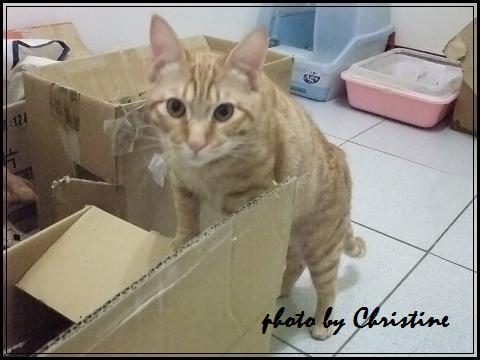 芬達(2010.10出生)5.JPG