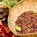 Fair-trade-coffee-Uganda-27