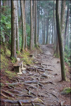 2013-0214-092903-檜山巨木森林步道