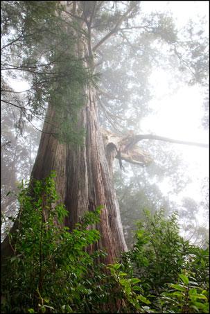 2013-0214-102805-檜山巨木森林步道