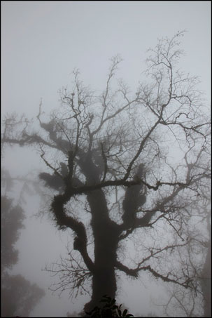 2013-0214-113922-檜山巨木森林步道