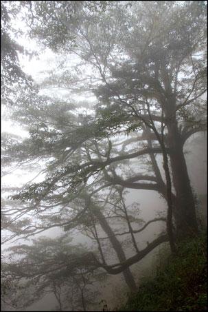 2013-0214-113658-檜山巨木森林步道