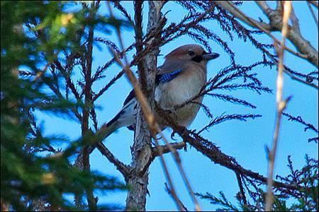 2013-0215-074500-橿鳥