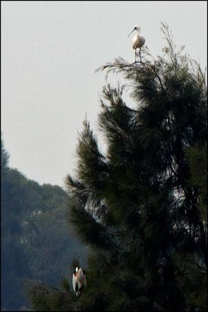 2013-0121-103956-烈嶼陵水湖