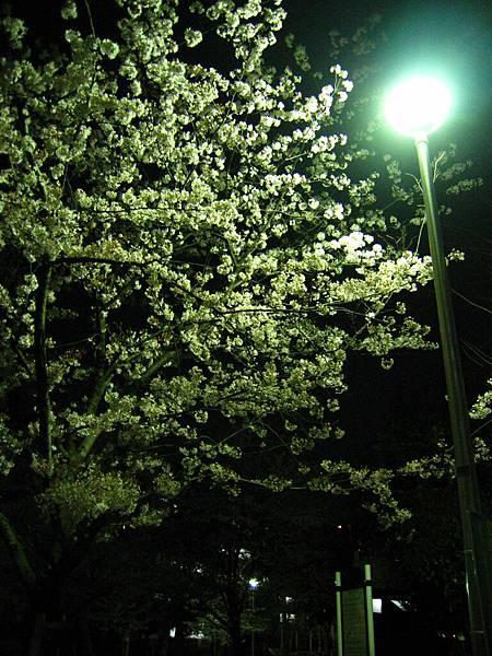 2008 東京春遊 003