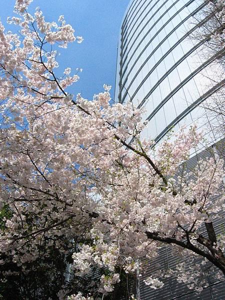2008 東京春遊 026