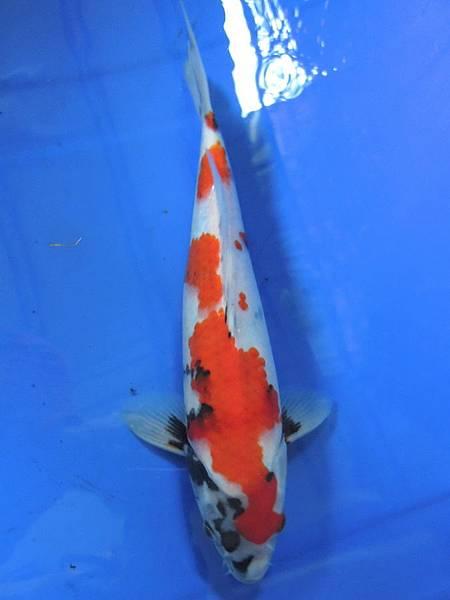 20120205家魚_0001_調整大小.jpg