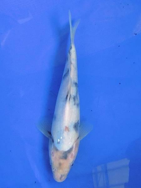 20120205家魚_0007_調整大小.jpg