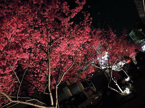 20120307文昌國小夜櫻_0021_調整大小