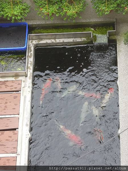 20120812魚池_0001_調整大小