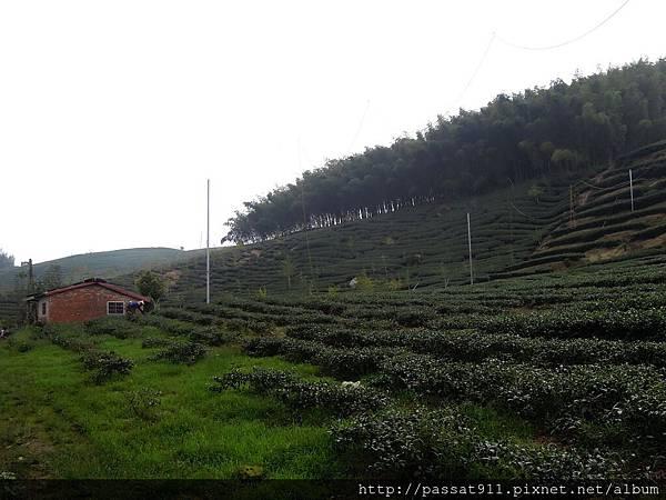 20120822八卦茶園_0228_調整大小