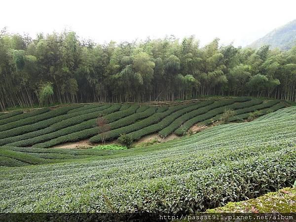 20120822八卦茶園_0303_調整大小