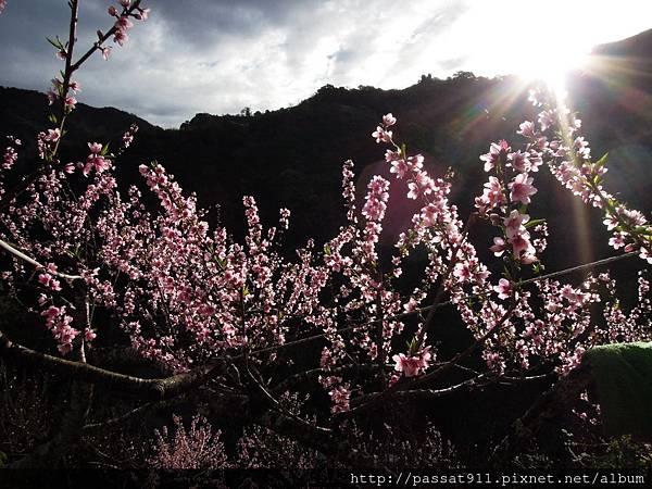 20130202南投春陽大ㄌㄨˇ灣_0339_調整大小