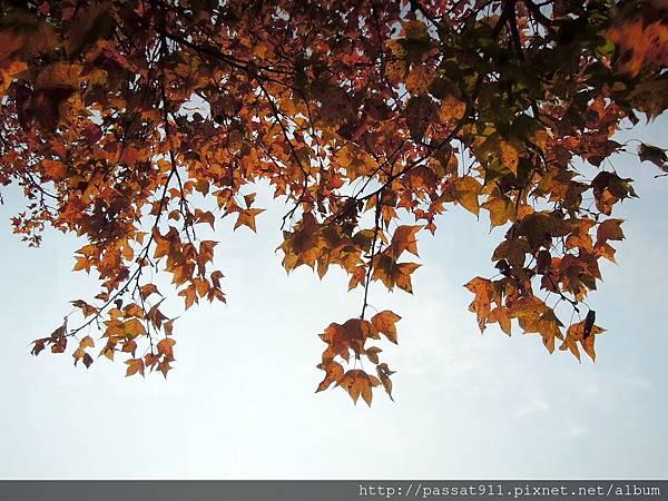 20140106台中楓樹社區_0057_調整大小.jpg