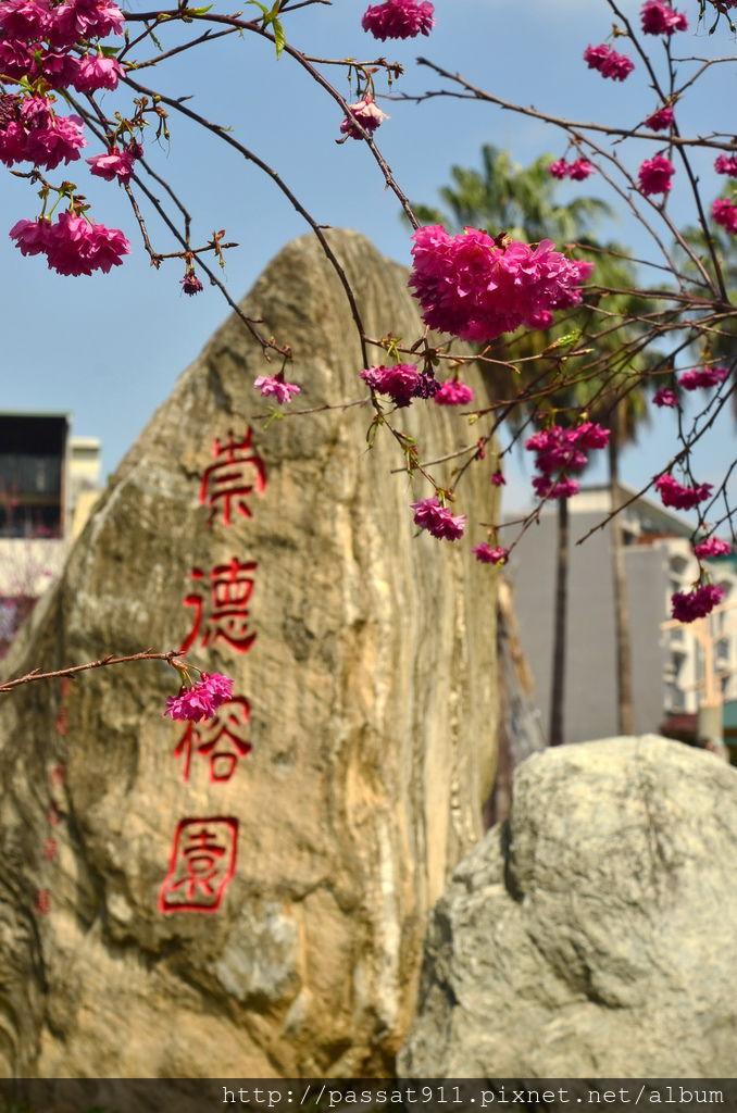 20140223台中崇德榕園櫻花_0019_調整大小.jpg