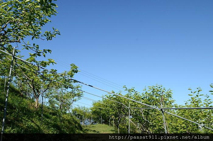 20150404新竹五峰賽夏有機農場_0408_調整大小.jpg