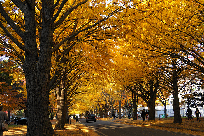 北海道大學(From halo.med.hokudai.ac.jp).jpg