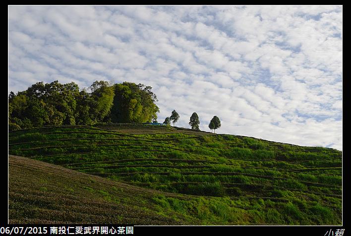 20150606南投仁愛武界開心茶園_0108.jpg